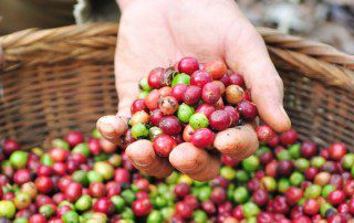 Coffee plants have more to offer than just their beans. coffee flour