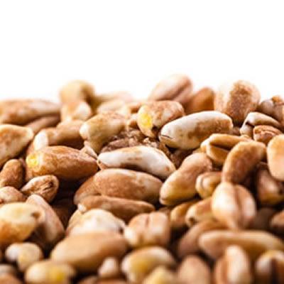 Whole spelt kernels