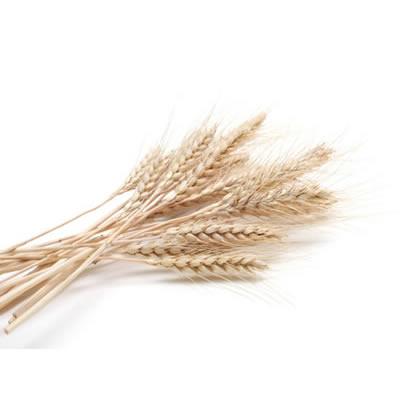 white whole wheat