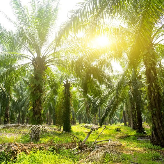 Is Your Palm Oil Sustainable?