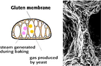 DATEM molecular bread structure