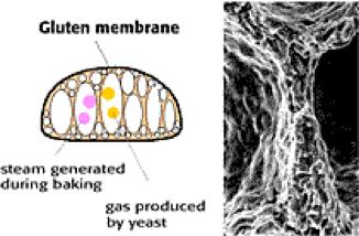 DATEM molecular bread structure