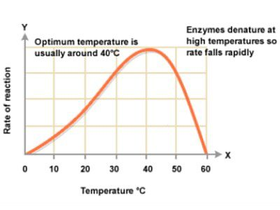 Enzymes denaturated at high temperatures