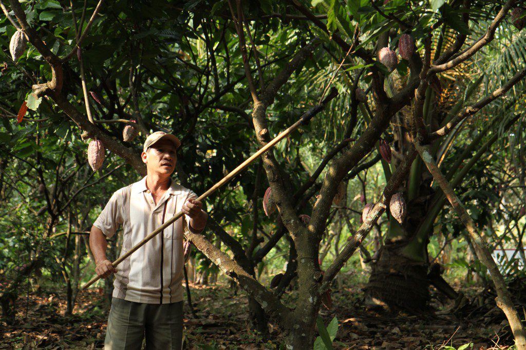A farmer working on his cocoa farm.