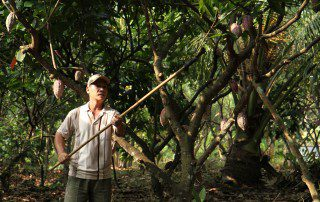 A farmer working on his cocoa farm.