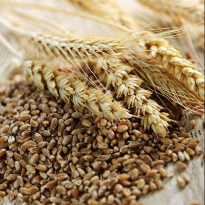 whole grain wheat kernels and ears